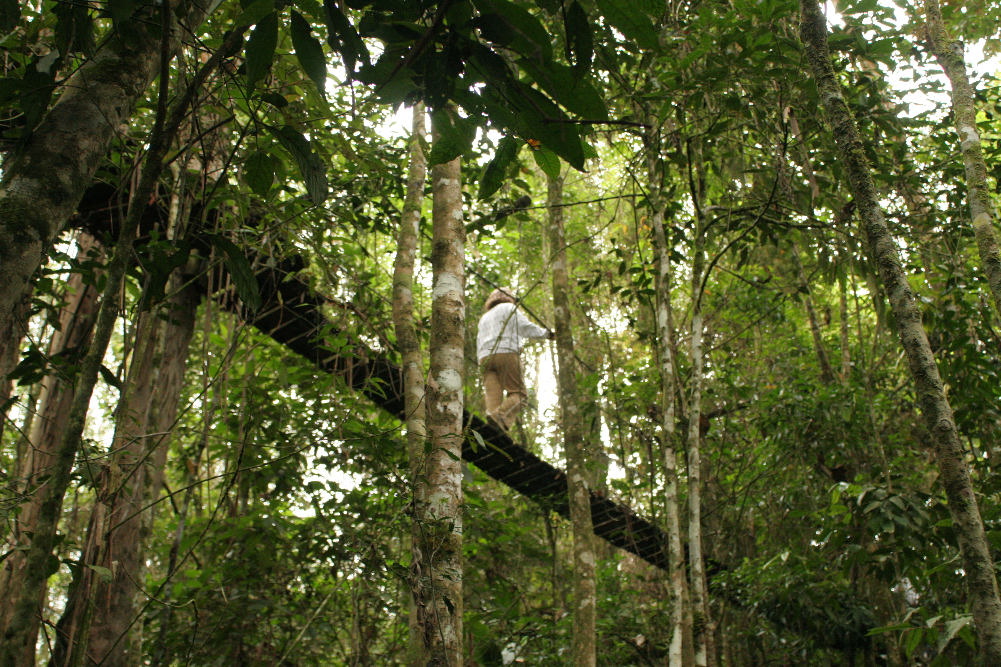 Second Regional Dialogue on Forests and Biodiversity Conservation in Brazil
