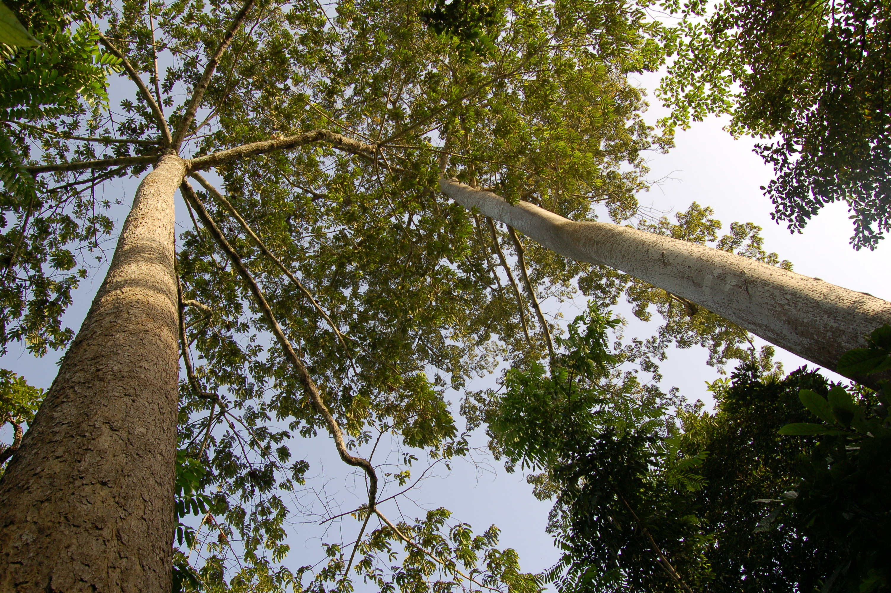 Building Partnerships to Reduce Forest Conflict in Asia