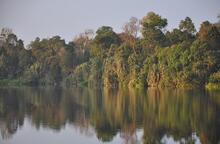 A forested lake in Indonesia